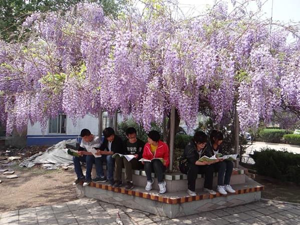 莱州六中校园风景