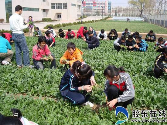 春回大地莱州市云峰初中中学种植园生机盎然上海训练生态英语听力新编图片